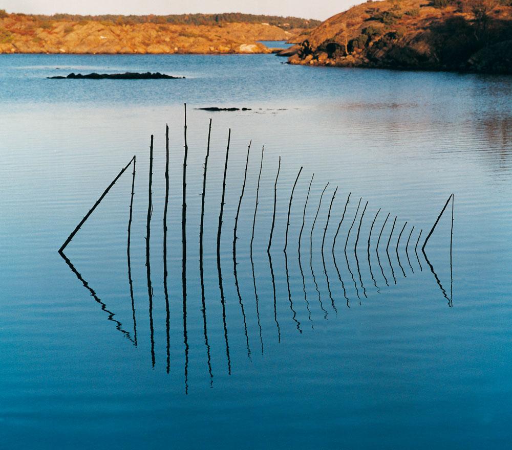 Fisch, Norwegen, LandArt