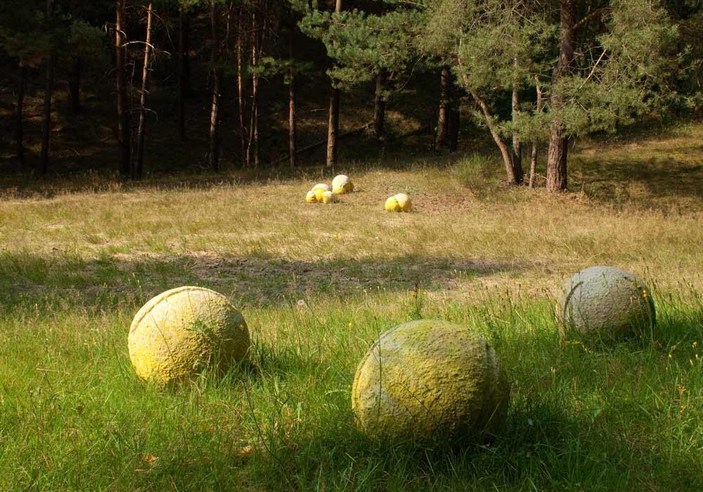 Pollen 1, Hannover, LandArt